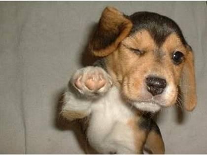 Doggie Wink