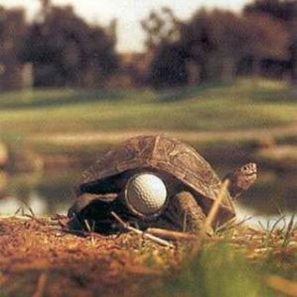 Turtle with a golf ball stuck in his butt